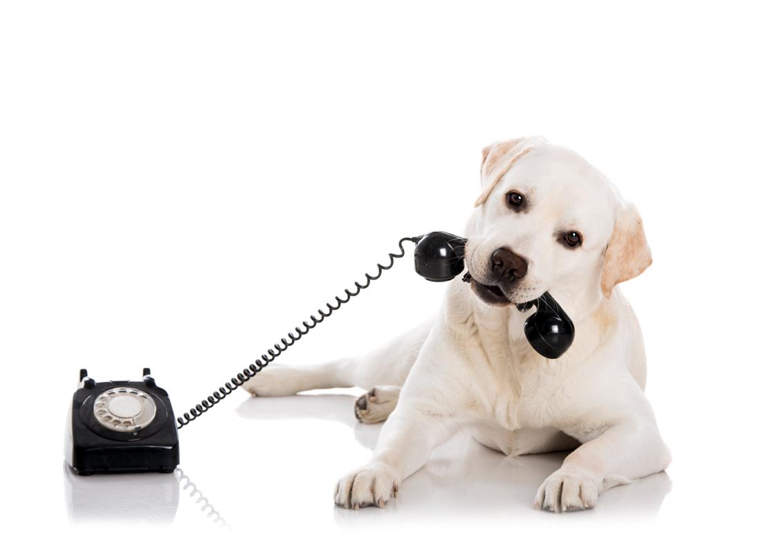 phone-dog