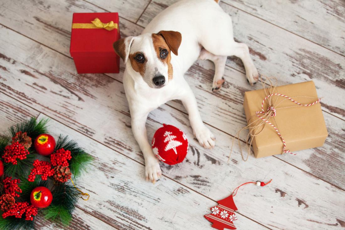 dogatchristmasdecoration