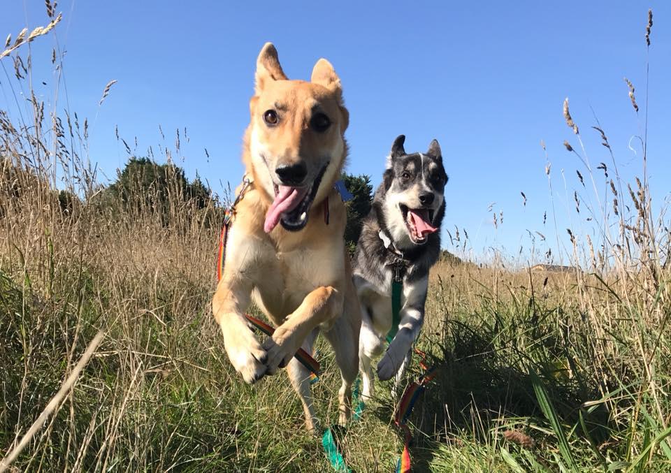 Monty & Lizzy1