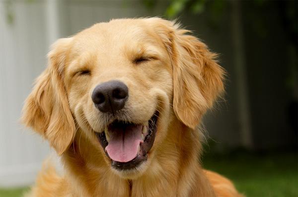 grinning dog